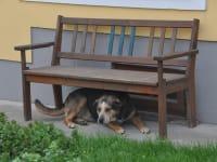 Unser Hofhund Trixi