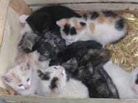 Katzenkiste