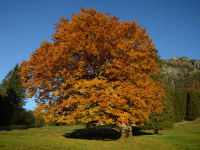 bezaubernde Herbstfärbung
