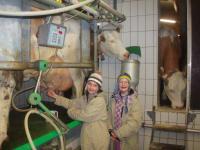 Erste Melkversuche