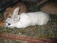Susi und Benschi