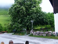 Unser Kastanienbaum