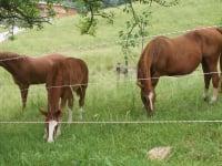 Pferde auf unserer Sommerweide