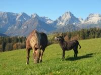 Steffi und Rudi auf der Weide
