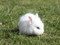 Junger Hase beim ersten Ausflug ins Grüne!