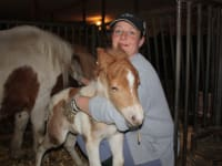 Suki, Ponyfohlen 1 Tag alt