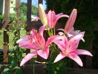 Überall blühen Blumen