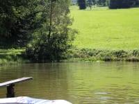 Teich im Sommer