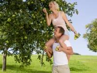 lustige Apfelernte