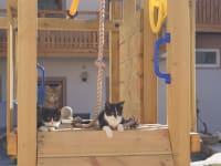 Katzen am Spielturm