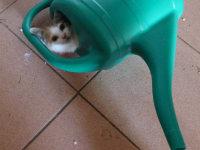 Lara, die freche Maus
