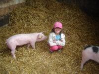 Ich hab keine Angst vor den Schweinchen