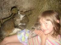 Unsere Katzen sind sehr beliebt