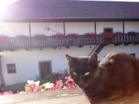 Sonnenbad für Katzen