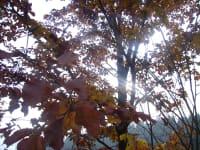 Herbstliches Licht und Schattenspiel