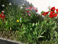 unsere ersten Frühlingsboten