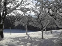 Winter am Nussbaumerhof