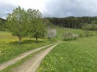 Es ist Sommer geworden am Nussbaumerhof!