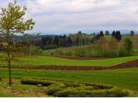 Blick in die Hopfenfelder