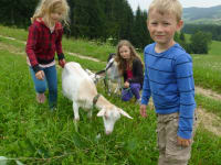Ziegenausführen macht Spaß - Biohof Schafflhof