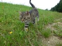 Unsere Katze auf Mäusejagd - Biohof Schafflhof