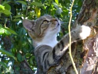 Was wird die Katze da wohl entdeckt haben am Schafflhof?