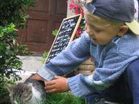 Spielen mit den Katzen
