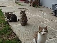Die Katzenscharr vom Biohof Schafflhof