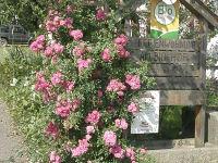 Willkommen in der Rosenzeit