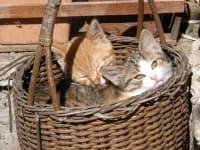 die Kätzchen warten schon