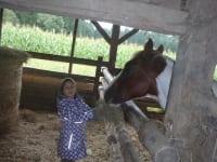 beim Pferdfüttern