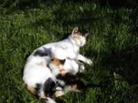 Katze mit ihren kleinen Kätzchen