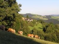 Blick Richtung Ferienhof