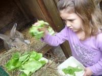 Helena beim Hasen füttern