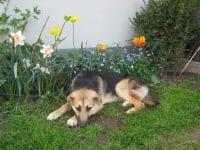 Hund Niki