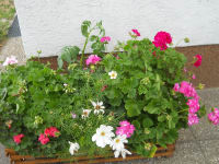 Blumenschmuck rund ums Haus