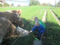 Christian und Laurenz bei unseren Weideochsen
