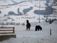 Jara un Calimero im Schnee