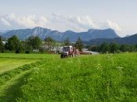 das Gras für die Kühe wird jeden Tag frisch gemäht