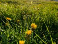 Frühjahrswiese