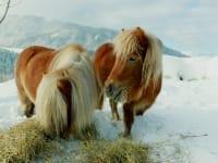Ponys Lea und Lillifee