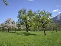 Obstgarten im Frühling