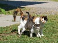 Unsere Schmusekatzen
