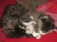 junge Kätzchen