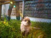 einer der Hasen
