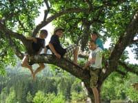 Baumbande