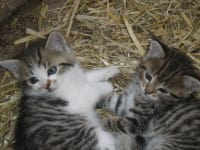 Unsere Kätzchen