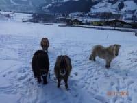 Ponys im Winter