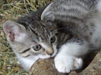 ich bin der Felix Katze