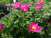 herrliche Blumen